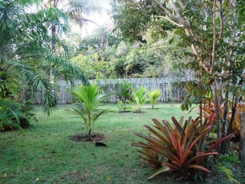 Jardim de casa...